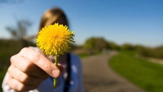 primary_flower