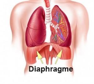 Yogalavie - diaphragme